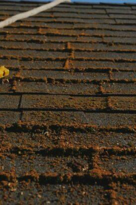 Roof Cleaning Portland, Portland Roof Cleaning, Moss Removal Portland, Gutter Cleaning Portland, Portland Gutter Cleaning, Pressure Washing Portland, Roof Moss Removal Portland, Roof Treatment Portland, Portland Moss Removal, Portland Roof Moss Removal, Roof Moss Cleaning Portland, Portland Roof Moss Cleaning, Roof Moss Treatment Portland, Cedar Shake Roof Cleaning Portland, Portland Cedar Shake Roof Cleaning, Cedar Roof Treatment Portland, Portland Pressure Washing, Roof Moss Portland, Portland Roof Moss, Portland Roof Moss Treatment